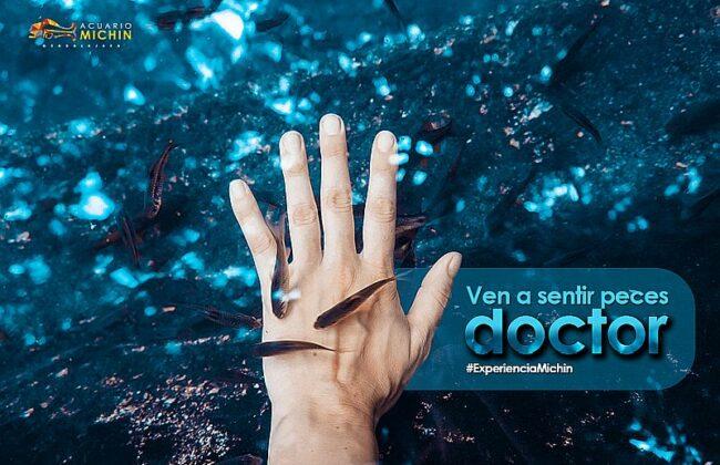 acuario michin peces medicos
